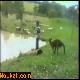 Les animaux en colère