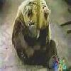 Souple l'ours