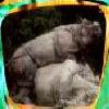 Rhinos en équilibre