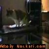 Les Chats qui parlent